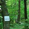 Napis v gozdu